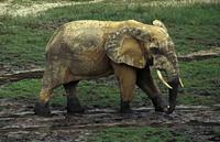 knauer-viering-afrika-11a Fotos aus Afrika