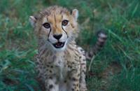 knauer-viering-afrika-12a Fotos aus Afrika