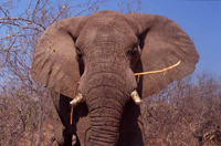 knauer-viering-afrika-14a Fotos aus Afrika
