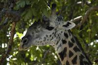 knauer-viering-afrika-1a Fotos aus Afrika