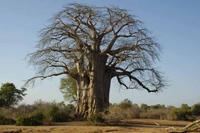 knauer-viering-afrika-3a Fotos aus Afrika