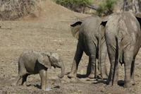 knauer-viering-afrika-5a Fotos aus Afrika