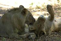 knauer-viering-afrika-6a Fotos aus Afrika