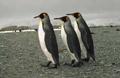 knauer-viering-antarktis-11a Fotos aus der Antarktis