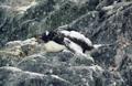 knauer-viering-antarktis-12a Fotos aus der Antarktis