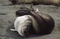 knauer-viering-antarktis-13a Fotos aus der Antarktis