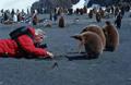 knauer-viering-antarktis-2a Fotos aus der Antarktis