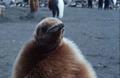 knauer-viering-antarktis-3a Fotos aus der Antarktis