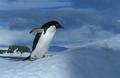 knauer-viering-antarktis-4a Fotos aus der Antarktis