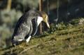 knauer-viering-neuseeland-23a Fotos aus Neuseeland