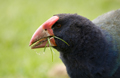 knauer-viering-neuseeland-8a Fotos aus Neuseeland