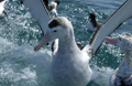 knauer-viering-neuseeland-9a Fotos aus Neuseeland
