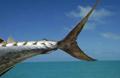 knauer-viering-suedsee-7a Fotos aus der Südsee