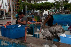 6EC_23a_1490-300x199 (Deutsch) Galapagos