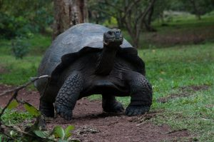 6EC_25a_1682-300x199 Galapagos