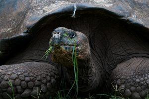 6EC_25b_7678-300x199 (Deutsch) Galapagos