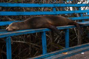 6EC_26a_1842-300x199 Galapagos