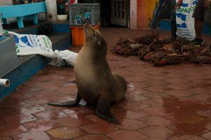 6EC_26a_1861-300x199 (Deutsch) Galapagos