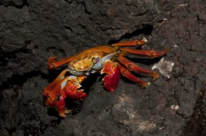6EC_27a_2005-300x199 (Deutsch) Galapagos
