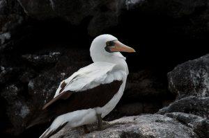 6EC_28b_8172-300x199 (Deutsch) Galapagos