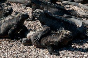 6EC_30a_2425-300x199 (Deutsch) Galapagos