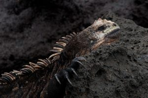 6EC_31a_9078-300x199 (Deutsch) Galapagos
