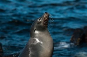 6EC_34b_2861-300x199 (Deutsch) Galapagos