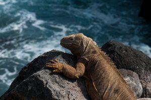 6EC_35b_3331-300x199 Galapagos
