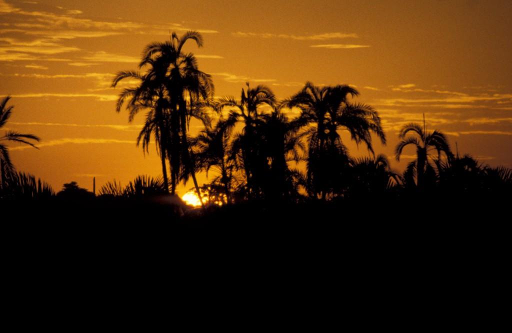 RegenwaldKamerun01-1024x666 Kamerun