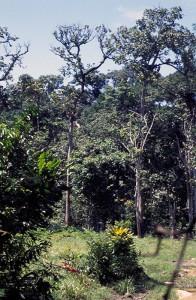 328-187-196x300 Fotos aus der Zentralafrikanischen Republik