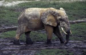 330-296-300x194 Fotos aus der Zentralafrikanischen Republik
