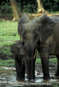 330-298-202x300 Fotos aus der Zentralafrikanischen Republik