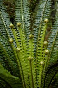 06NZ_34_DSC0064-199x300 Pflanzen