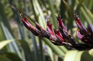 08NZ8515-300x199 Pflanzen