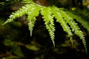 10NZ_11_DSC0079-300x200 Pflanzen