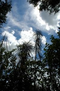10NZ_37_DSC0076-199x300 Pflanzen