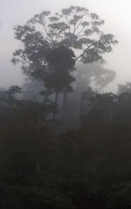 409-80-188x300 Kamerun