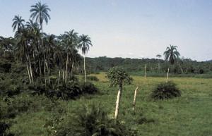 409-88-300x193 Kamerun