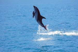 NZ14-25_DSC0057-1-300x200 Tiere